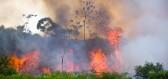 Zachrání Norsko deštné pralesy? Schválilo totiž zákaz palmových olejů.