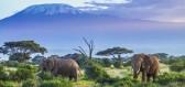 Produkty vyrobené ze sloního trusu představují výdělečný byznys
