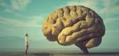 Smyslů nemáme pět, ale dvacet, aneb co víme o mozku a není to pravda