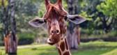 Na Safari Dvůr Králové za zážitky i adrenalinem
