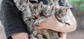 Kastrace u koček? Jaká jsou její rizika a výhody, když máte doma kočku a nechcete koťata?
