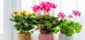 Pěstování pro začátečníky: Začněte s nenáročnými pokojovkami