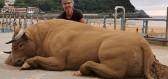 Španělský umělec vytváří sochy z písku, které vypadají jako živá zvířata