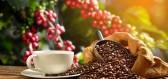 Cestování s kávou - ve které zemi jste mohli poprvé ochutnat cibetkovou kávu nebo flat white?
