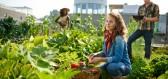 Zemědělství budoucnosti sází na plodiny pocházející ze střech budov
