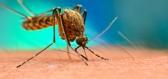 Jak se vyvarovat štípancům od komára? Nenoste černou barvu, nepijte pivo a nesportujte!
