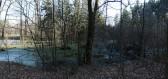 Tajemný Branišovský les: Místo plné přízraků a nadpřirozených jevů