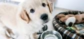 Máte doma štěně? Jak nastavit pravidla, aby vám nepřerostlo přes hlavu?