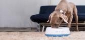 Chytré misky pro domácí zvířata samy dávkují žrádlo a brání vzniku střevních bakterií