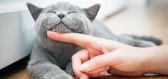 Chcete být zdraví a šťastní? Pořiďte si kočičku!