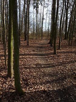Branišovský les - Bor